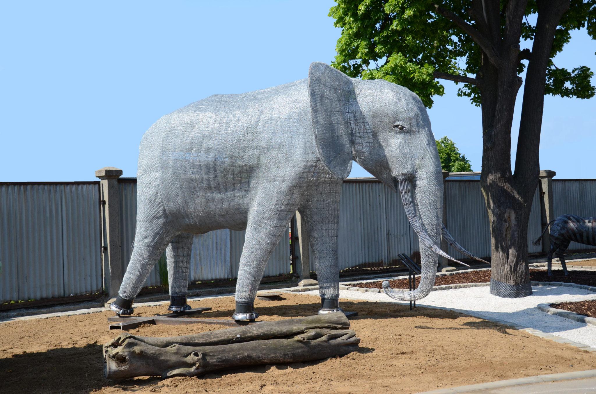 slon Malaki